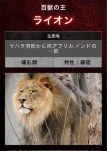 危険生物 ライオン