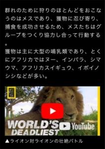 危険生物 ライオンの動画