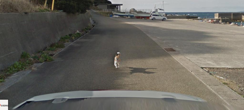 種子島 ストリートビュー 犬