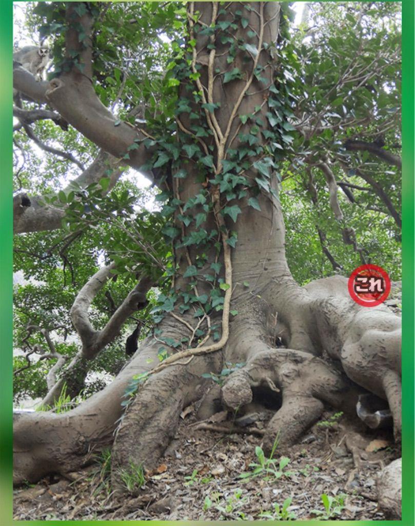 【どうぶつみっけ3!】 FILE.03「根が太い木」の攻略