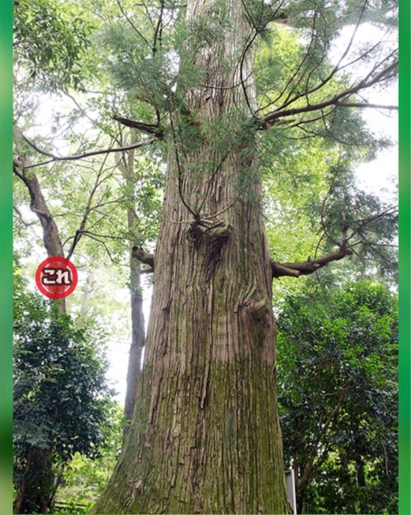 【どうぶつみっけ3!】 FILE.19「そびえ立つ木」の攻略