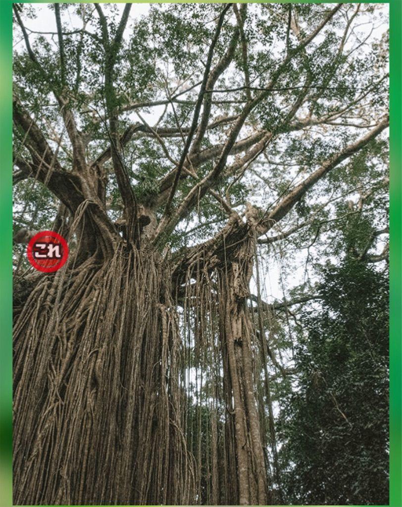 【どうぶつみっけ3!】 FILE.16「大木」の攻略