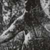 【ジャイアントカンガルー】オーストラリアに住む大きさ3mのUMAとは?
