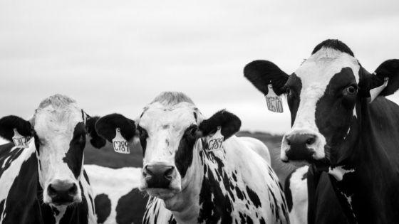"""""""生きたまま""""において、家畜の加工はどう考えるか?"""