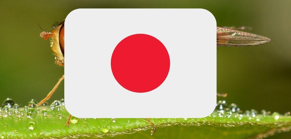 日本にヒトヒフバエはいるのか?