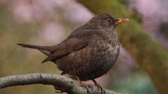 フェネクスは鳥の美しい姿で現れる?